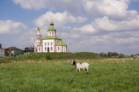 Typical Russian landscape. Goat grazing in a meadow on the background of the Church. Suzdal, Russia.