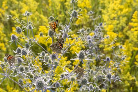 Numerous butterflies collecting nectar from flowers in the meadow.