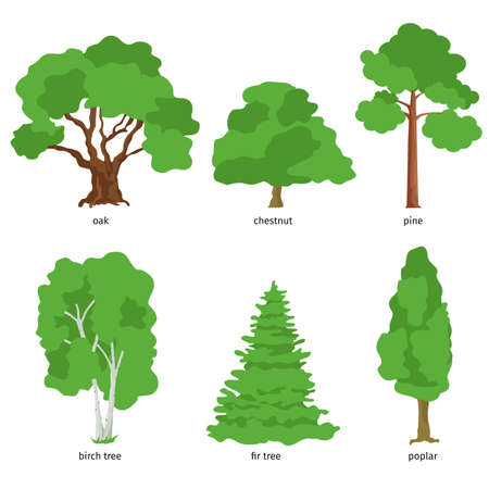 Illustration of different kind of tree. Flat cartoon vector illustration