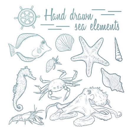 etch: Collection of marine inhabitants. Vector set. Sea shell Hand drawn seashell marine engraving illustration on white background. Sea shell etch sketch drawing.
