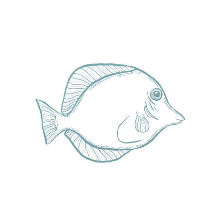 flounder: Marine fish.Hand drawn sketch exotic fish. vector illustration.