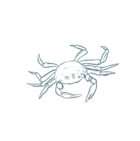 Vintage sea background. Hand drawn sketch seafood vector illustration of crab