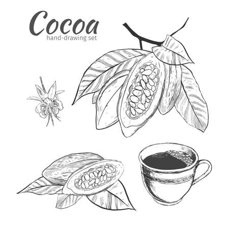 Background with Cocoa bean and leaf. , hand drawn engraving sketch etch illustration. Hand painted cocoa, cacao doodle graphic set.