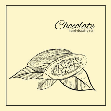 cocoa bean: Background with Cocoa bean and leaf.