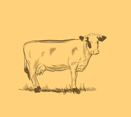 Cow in graphic style from hand drawing image. Vector illustration in cartoon style,