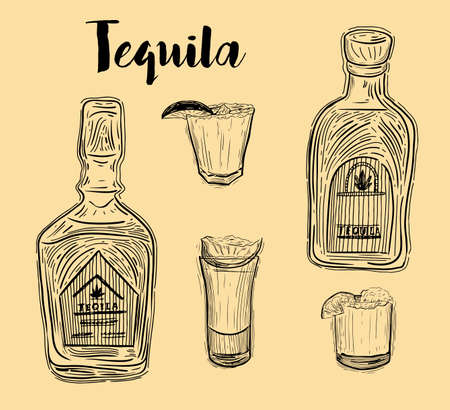 Tequila bottle, shot glass and ingredients, vector sketch. Mexican alcohol drinks menu design elements. Agave plant and root illustration. Ilustração
