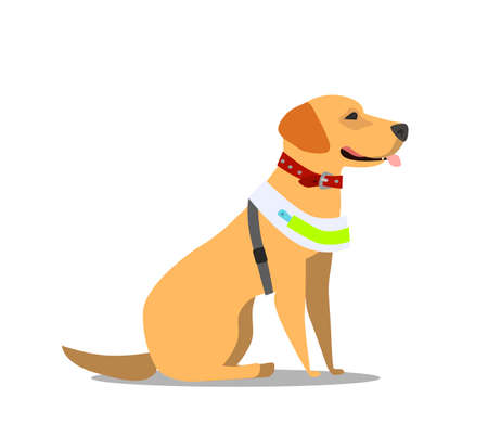 Guide dog, specially trained seeing eye for a blind person, flat cartoon vector illustration isolated on white background. Flat cartoon Labrador guide dog for blind people Standard-Bild - 116836996
