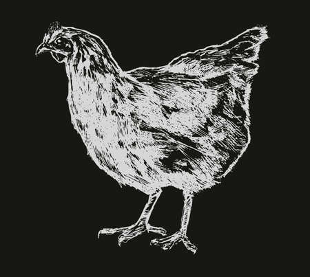 Hen, chicken sketch. Poultry farm, farming concept Vintage vector illustration Stok Fotoğraf - 123394743