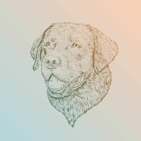 dog pen: vector illustration head Labrador in sketch style Illustration
