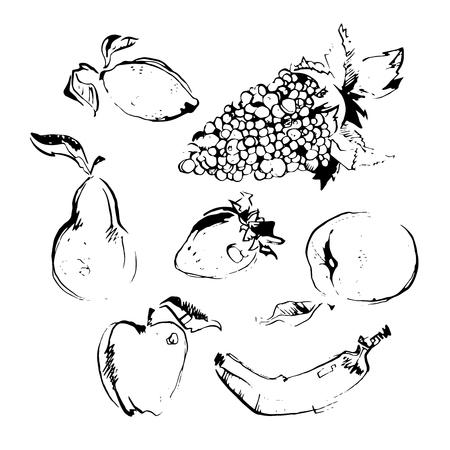 Vector illustration EPS10. Set of different hand drawn fruit