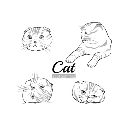 Set of vector illustrations of cats scottish fold breed.