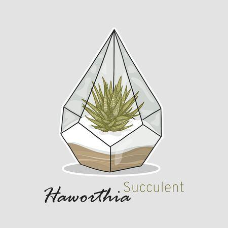 Succulents haworthia. Hand drawing. Linear style. Vector illustration. 向量圖像