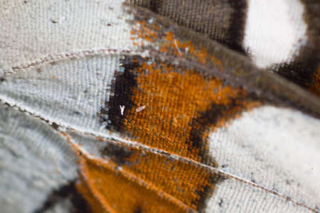 particularly: particularly magnified butterfly wing Stock Photo