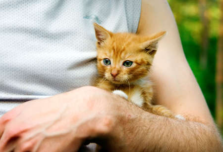 Mans arms holding little red kitten  photo