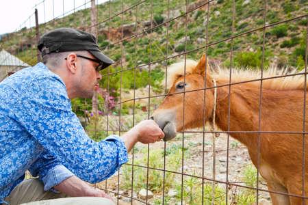 feeding through: man feeding young beautiful pony through the fence