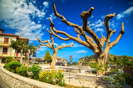 old trees in the central square of the Savoca town - the city of Godfather film, Sicily, Italy photo