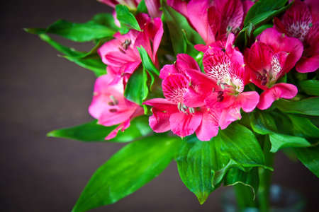 alstromeria: colorful bouquet of bright pink flowers of alstromeria (Peruvian Lily) Stock Photo