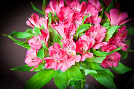 alstromeria: bouquet of bright pink flowers of alstromeria (Peruvian Lily) Stock Photo