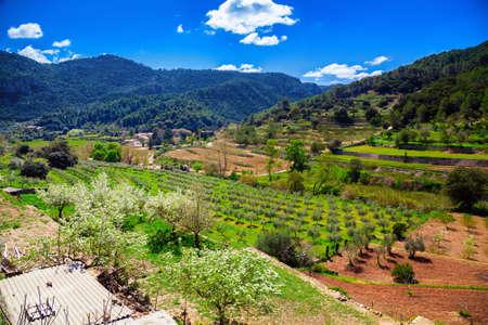 beautiful valley with olive grove and vineyard in Sierra de Tramuntana in spring, Majorca, Spain