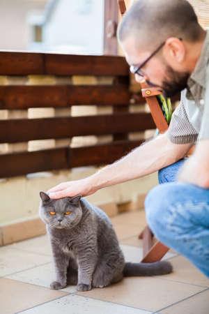stroking: man stroking gray british shorthair cat