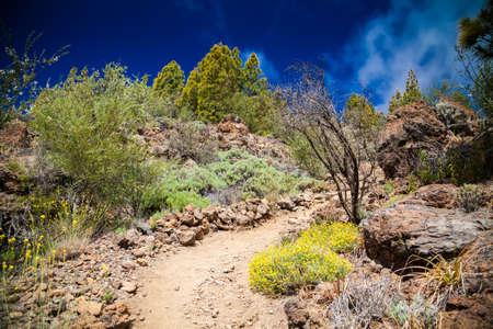 beautiful green landscape in the Vilaflor Paisaje Lunar route, Tenerife, Spain