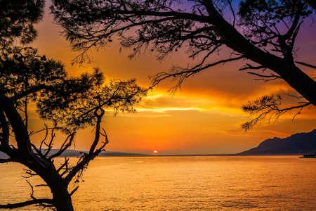 amazing sunset above the sea through pine trees in Croatia