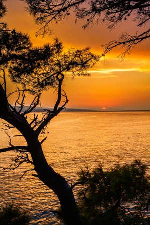 beautiful sunset above the sea through pine trees