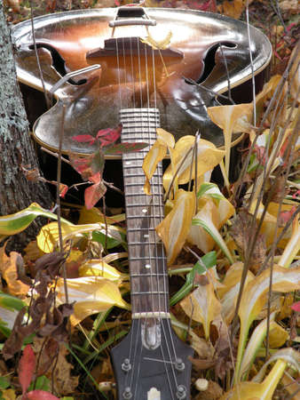 composition: images on composition, guitar
