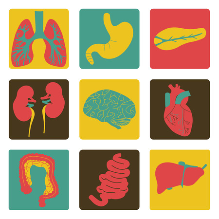 Vector illustration of icons of internal organs  Stock Vector - 27560252
