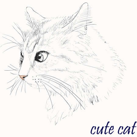 Illustration of Cat Isolated on Background