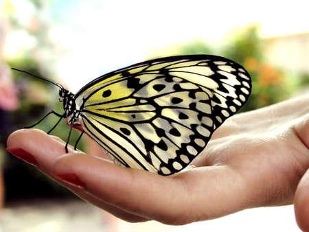 여자의 손에 쉬고 나비