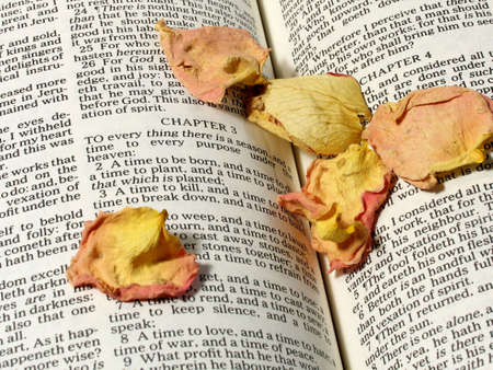 Bible Verse:  To Everything There is a Season Stock Photo