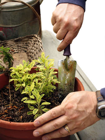 Close up of man potting a plant with gardening tools isolated on white Stock Photo