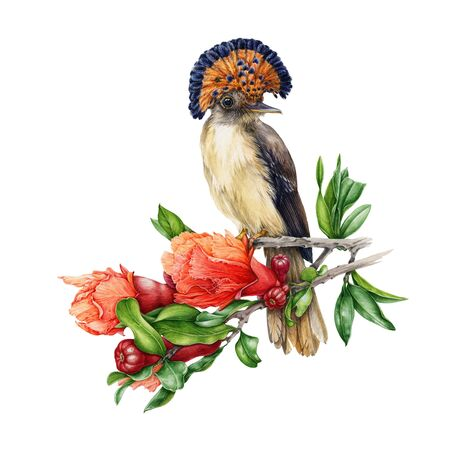 Watercolor illustration of an amazon paradise flycatcher sitting on the branch of pomegranate tree. Hand painted beautiful bird surrounded by flowers and leaf of Punica. Isolated on white background. Stock Photo