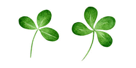 Green clover plant watercolor illustration. Single hand drawn natural herb image. Four leaf clover - luck symbol. Clover celtic and Irish sign. Isolated on white background.