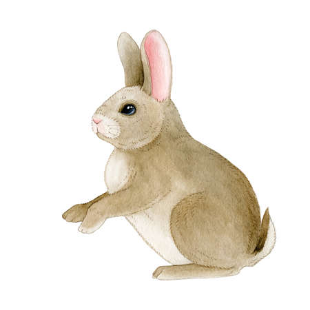 Small funny rabbit watercolor image. Hand drawn cute little domestic bunny. Festive pretty animal illustration element isolated on white background 免版税图像
