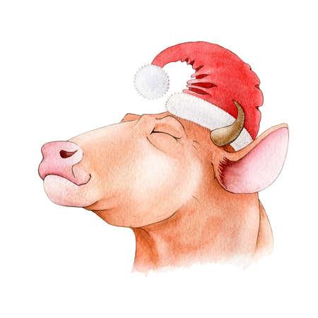 Happy bull (cow) in red santa hat watercolor