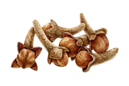 Clove spice heap watercolor illustration. Hand drawn close up aromatic syzygium aromaticum herb dry flowers. Group of clove buds natural organic product. Healthy spicy ingredient for cooking.
