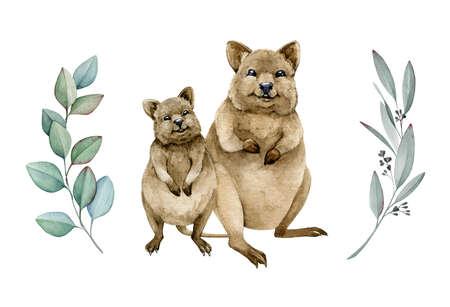 Quokka couple watercolor illustration. Native Australia funny animal. Two quokka smiling endemic australian mammal. On white background. Hand drawn sketch