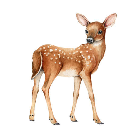 Young forest deer. Beautiful fawn image. Watercolor bambi illustration. Wild young deer animal with white back spots. Forest and park wildlife animal. Cute fawn on white background