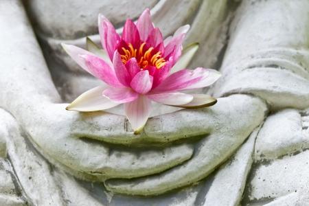 Manos de Buda que sostiene la flor Foto de archivo