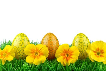 Easter eggs on green grass and white background photo
