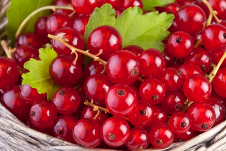 red currant in basket with leafs in close up photo