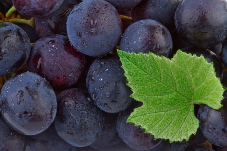 Grapes background  Standard-Bild