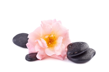 spa concept, pink rose with zen stone photo