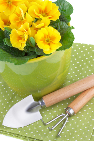 Primula Flowers with Garden Tools photo