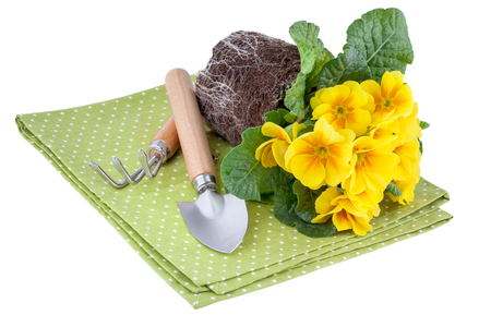 Yellow Flowers with Garden Tools photo