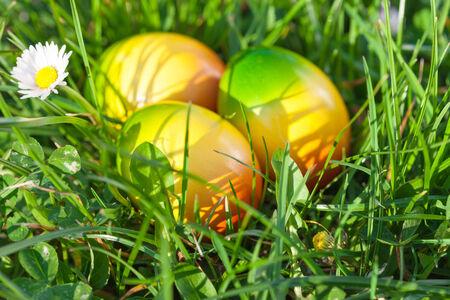 Easter Eggs hidden in Green Grass  photo