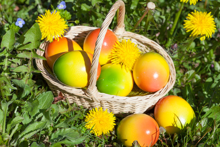 Easter Eggs on a Meadow with Flowers photo