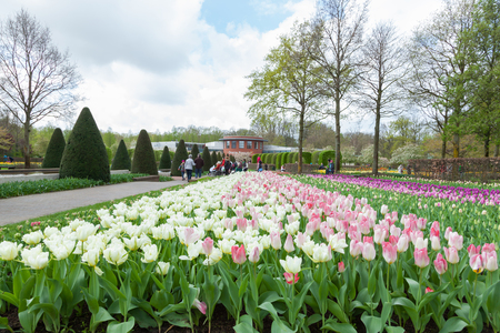 Keukenhof is the worlds largest flower garden with 7 million flower bulbs on an area of 32 hectares. Keukenhof Garden, Lisse, Netherlands - April 08, 2014.